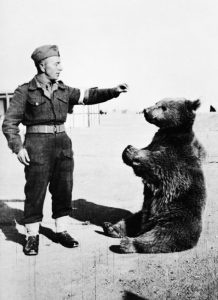 1wojtek_the_bear